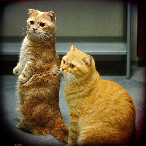 两个小猫的忧郁