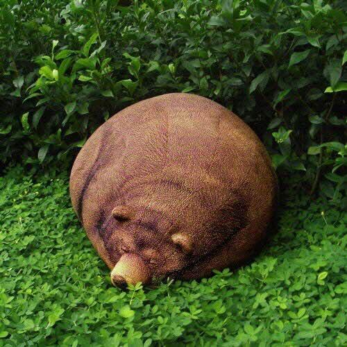 灰熊(Ursus arctos horribilis)为棕熊亚种,分布于北美洲西部,是北美最常见的棕熊。――维基百科