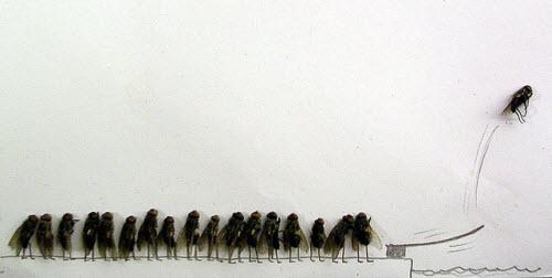 这张图也许解释了怎么把苍蝇弄死又能保持外观的完整