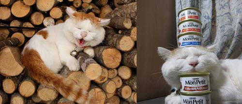 """吉尼斯为什么还不给猫叔发奖状,""""头顶上放过最多东西的猫"""""""