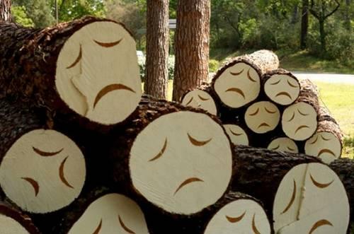 同时祝木料们死得其所……