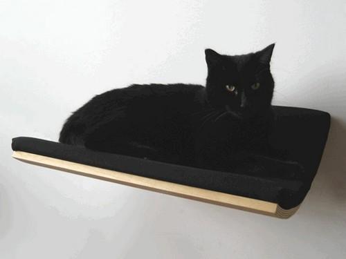 黑床配黑猫,这要是半夜起来尿尿没开灯撞上了怎么办