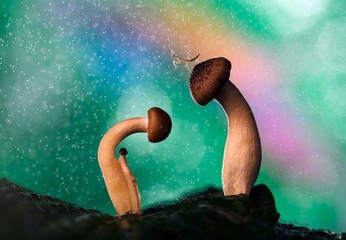 蘑菇真猥琐,那个小的蘑菇真是蘑菇中的蘑菇啊