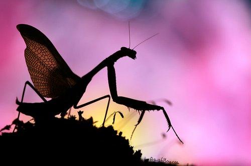 最怕昆虫有翅膀!