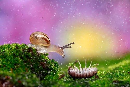 不要指责蜗牛只是在旁边看,蜗居的人怎么有经济实力扶老太太啊