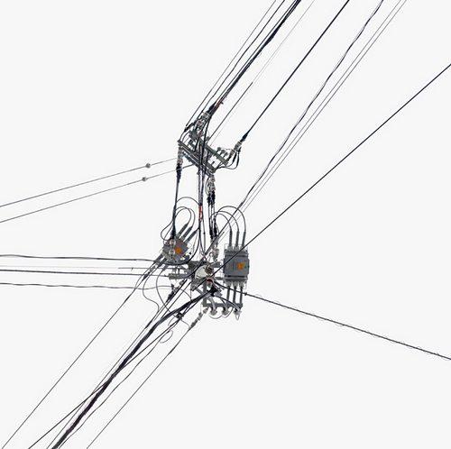电线和树一样也有生命
