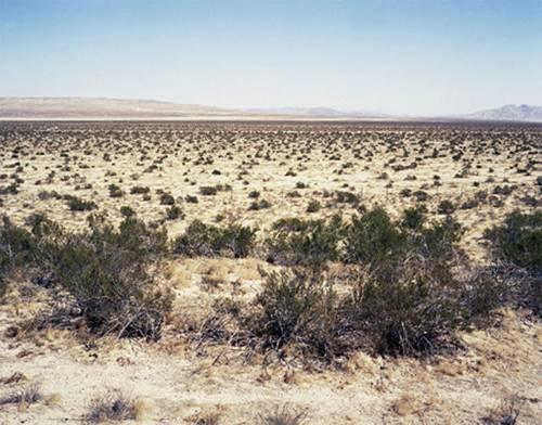 沙漠植物喜欢围成一圈吗?