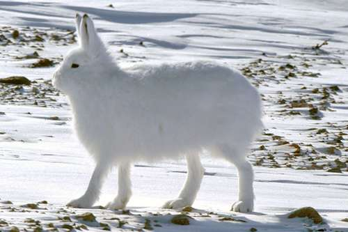 雪兔站起来之后这奇妙的感觉是怎么回事?!