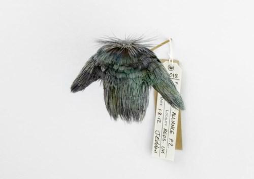 手机上网难以查询资料,这系列羽毛小衣服的命名怪有意思的等以后再补充介绍,有一些是战机名称,这个叫 18 alliance P.2 seabird