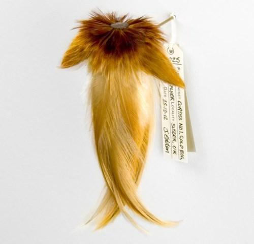 手机上网难以查询资料,这系列羽毛小衣服的命名怪有意思的等以后再补充介绍,有一些是战机名称,这个叫 25 curtiss no.1 gold bug/golden flye