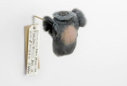 手机上网难以查询资料,这系列羽毛小衣服的命名怪有意思的等以后再补充介绍,有一些是战机名称,这个叫 22 robin DR.400-108 dauphin 8