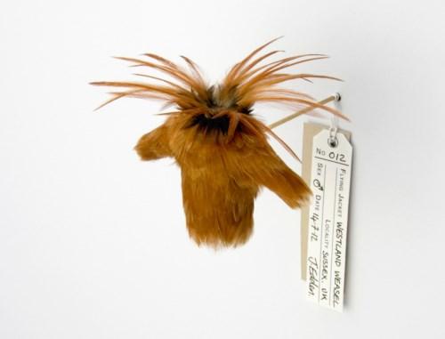 手机上网难以查询资料,这系列羽毛小衣服的命名怪有意思的等以后再补充介绍,有一些是战机名称,这个叫 12 westland weasel