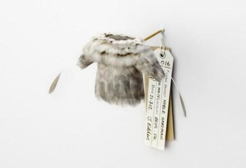 手机上网难以查询资料,这系列羽毛小衣服的命名怪有意思的等以后再补充介绍,有一些是战机名称,这个叫 16 noble hardman snowbird MK.IV