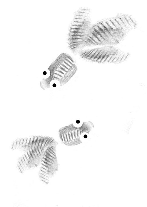 自从被清道夫鱼把水泡吸破死光之后我们家再也没有养过水泡金鱼