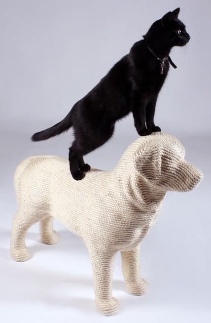 这只猫只是模特,真正的德川咪咪是白色的加菲猫