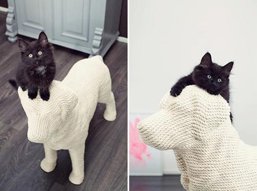 娇滴滴的小猫