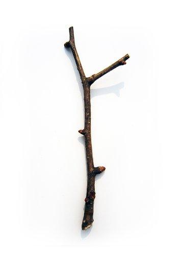 春天的小树……枝
