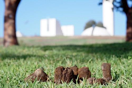 出现在草地上一下子感觉自然多了,我松了一口气
