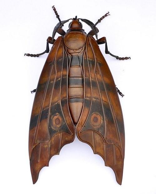 其实,昆虫如果没那么软绵绵,就会比较受人喜欢。