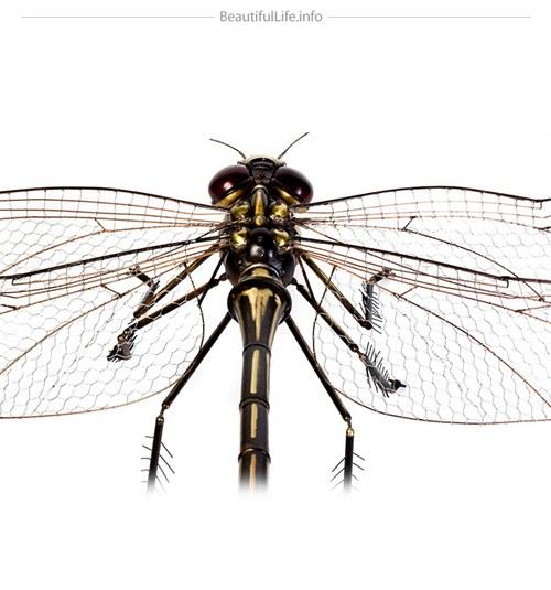 打蚊子的时候,很多人可以徒手,但是没人愿意徒手打苍蝇。