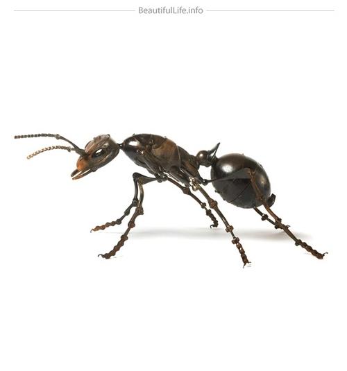 蚂蚁这种英雄……咦?我为什么要用英雄这个字眼?