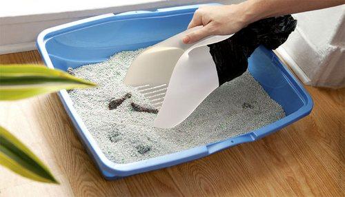 坚定地插入猫砂中