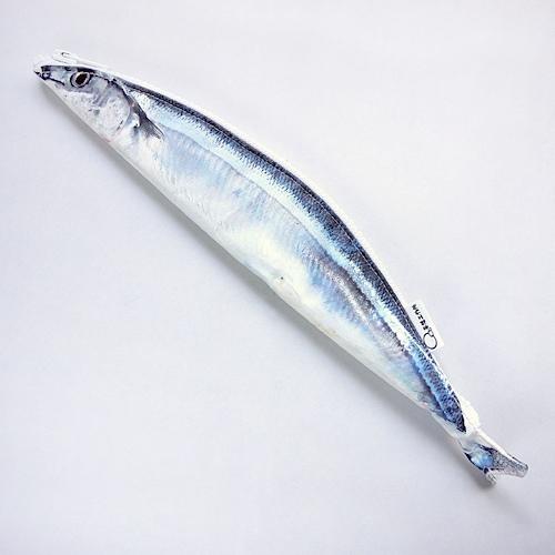 这个鱼好喜欢!