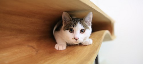 猫听说这个桌子好几万惊呆了